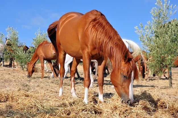 Disparo de enfoque selectivo de un caballo marrón comiendo hierba