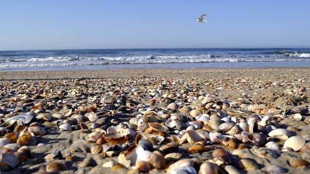 Disparo de enfoque selectivo de cientos de mariscos en la playa