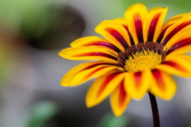 Disparo de enfoque selectivo de una flor amarilla con marcas rojas en las hojas
