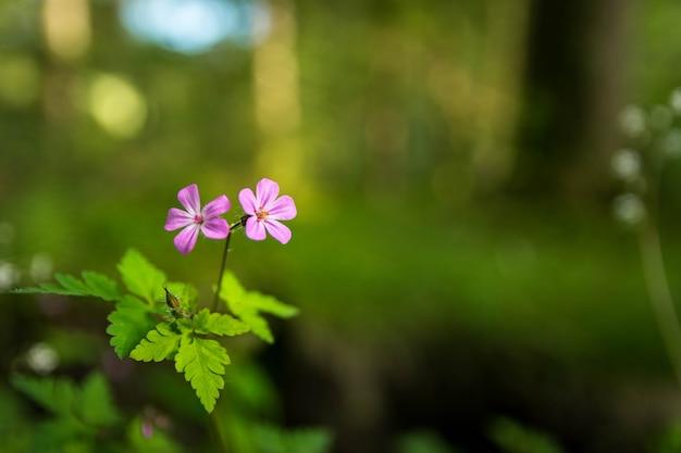 Disparo de enfoque selectivo de las flores de campo púrpura en el jardín