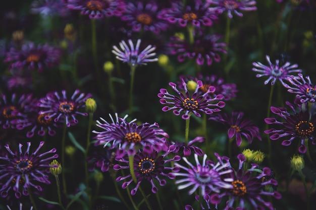 Disparo de enfoque selectivo de flores de pétalos de color púrpura con hojas verdes