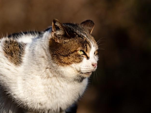 Disparo de enfoque selectivo de un gato callejero en el bosque de izumi en yamato, japón durante el día