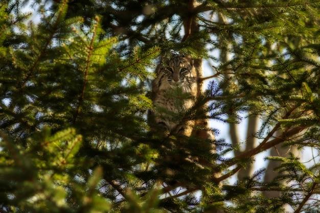 Disparo de enfoque selectivo de un gato salvaje en la rama de un árbol