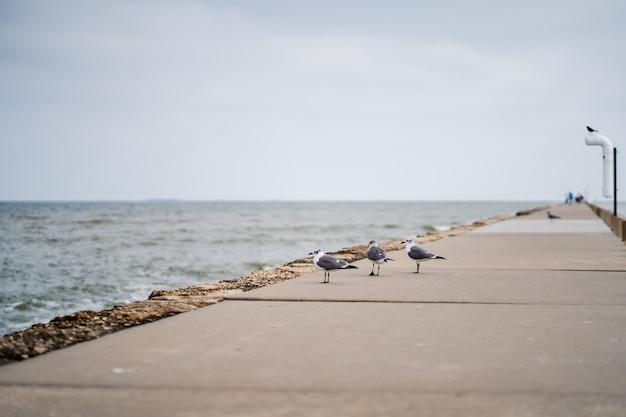 Disparo de enfoque selectivo de gaviotas en la pasarela junto a una playa