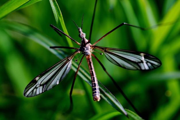 Disparo de enfoque selectivo de una grúa volar sobre una planta verde en la naturaleza en twente, países bajos