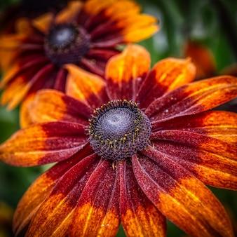 Disparo de enfoque selectivo de una hermosa flor de gerbera con pétalos rojos y naranjas
