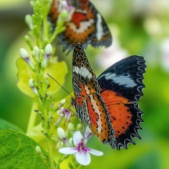 Disparo de enfoque selectivo de una hermosa mariposa sentada en una rama con flores pequeñas