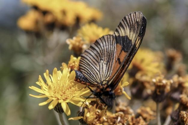 Disparo de enfoque selectivo de una hermosa mariposa sobre las flores amarillas