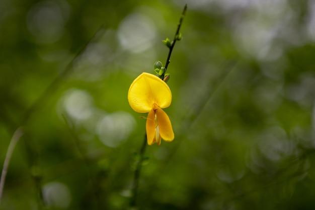 Disparo de enfoque selectivo de hermosas flores amarillas en un bosque