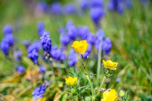 Disparo de enfoque selectivo de hermosas flores amarillas y púrpuras en un campo cubierto de hierba