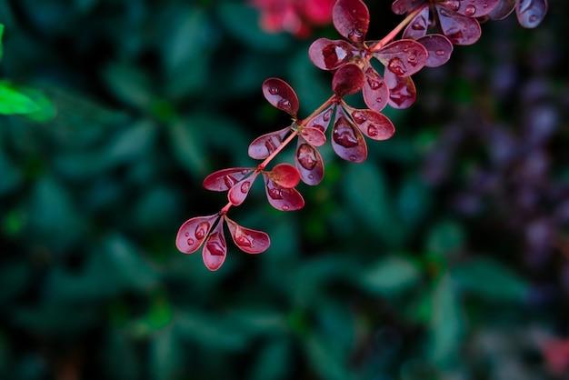Disparo de enfoque selectivo de hojas coloridas cubiertas de rocío