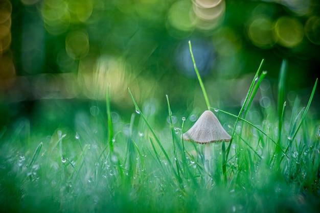 Disparo de enfoque selectivo de un hongo que crece en la hierba capturado en opole, polonia