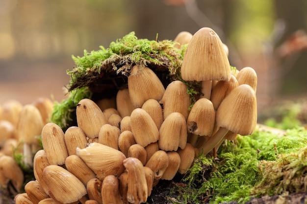 Disparo de enfoque selectivo de hongos que crecen en un suelo cubierto de musgo