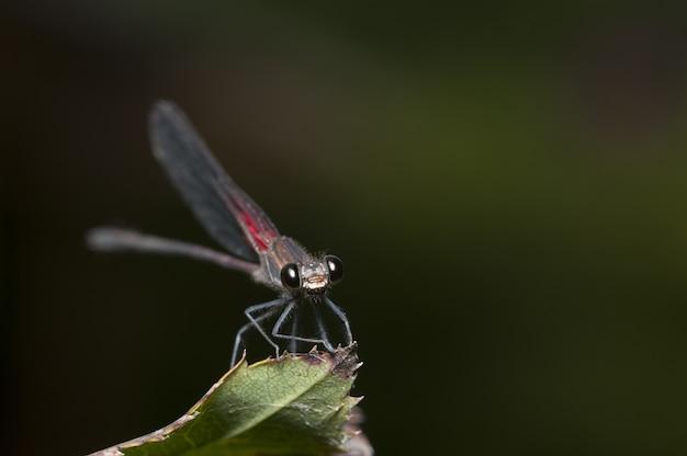Disparo de enfoque selectivo de un insecto de alas netas sentado en una hoja
