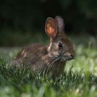 Disparo de enfoque selectivo de un lindo conejo en el parque