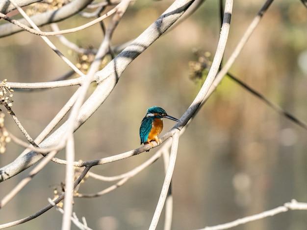Disparo de enfoque selectivo de un lindo martín pescador sentado en la rama de un árbol
