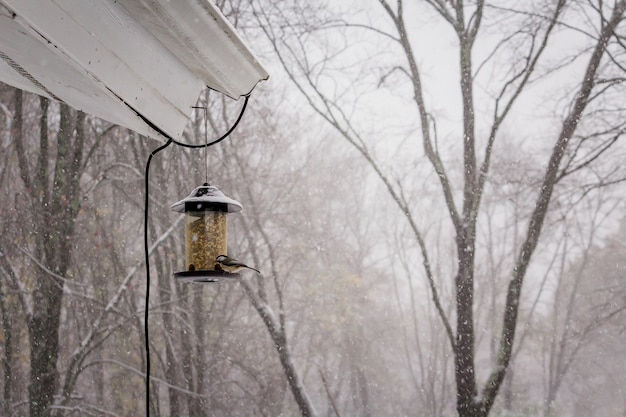 Disparo de enfoque selectivo de un lindo pájaro cardenal en un día de invierno