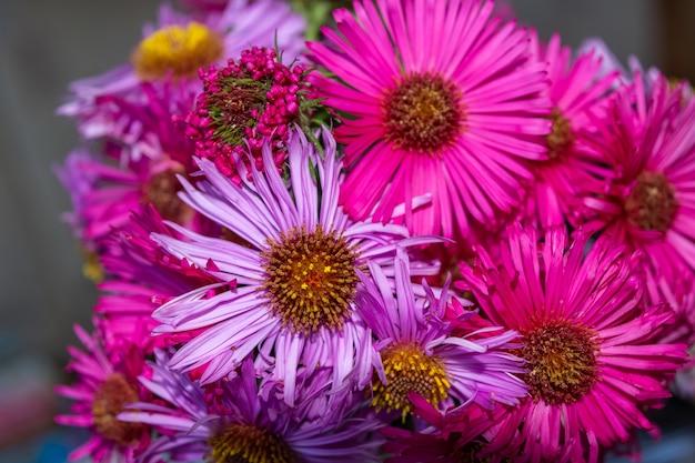 Disparo de enfoque selectivo de las magníficas flores aster rosa y violeta en un ramo