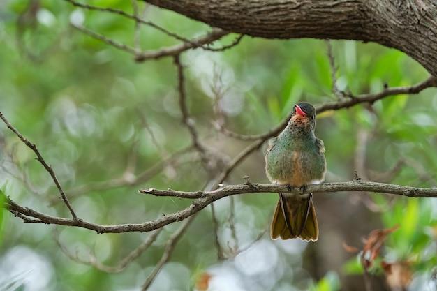 Disparo de enfoque selectivo de un pájaro exótico sentado en la rama de un árbol