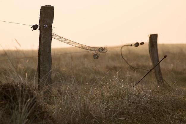 Disparo de enfoque selectivo de palos de madera de pie en medio de un campo