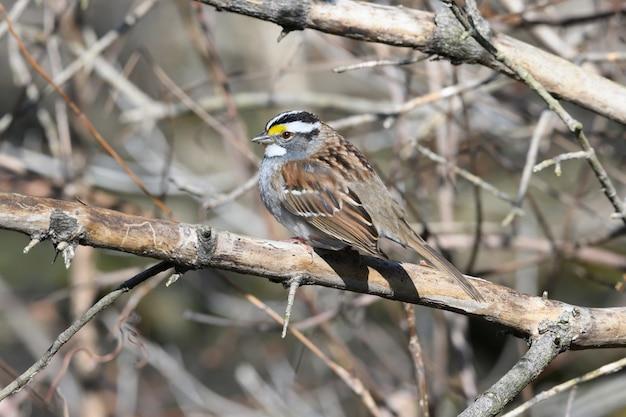 Disparo de enfoque selectivo de un pequeño pájaro sentado en la rama de un árbol en un bosque