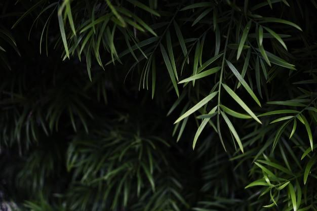 Disparo de enfoque selectivo de plantas con hojas verdes