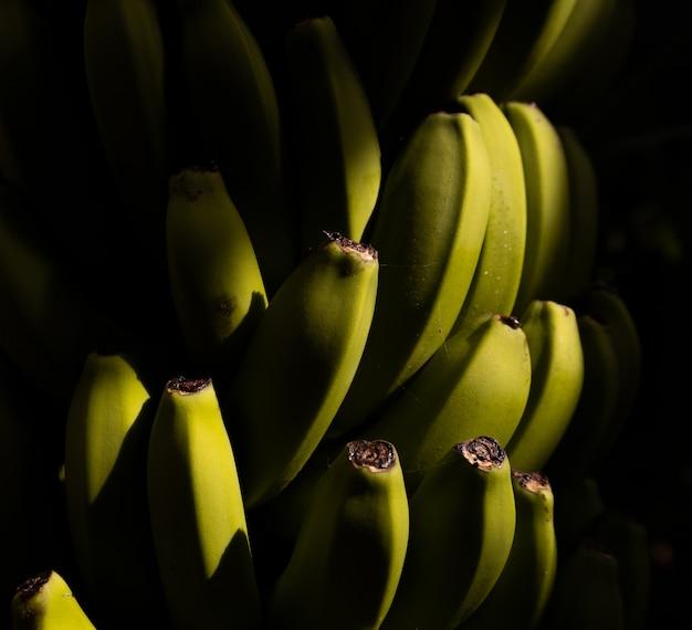 Disparo de enfoque selectivo de un racimo de plátanos