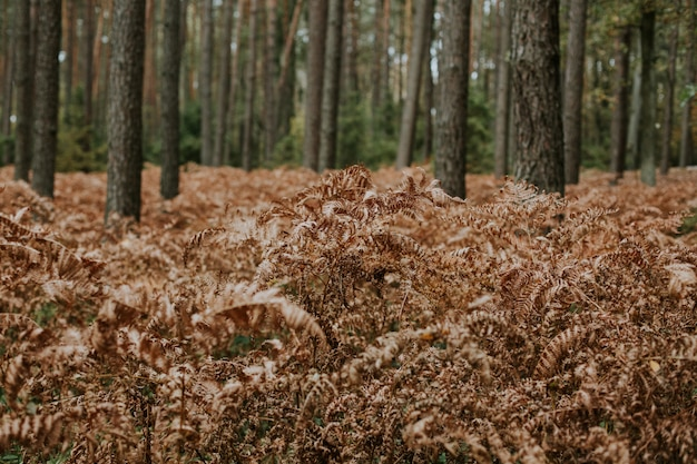 Disparo de enfoque selectivo de ramas secas de helechos de avestruz que crecen en un bosque con árboles altos