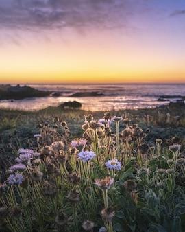 Disparo de enfoque selectivo vertical de flores de campo durante la puesta de sol