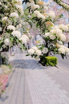 Disparo de enfoque selectivo vertical de rama de flor blanca