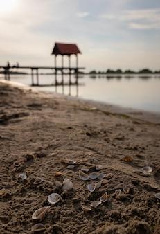 Disparo de enfoque superficial de conchas marinas en la arena con un océano borroso