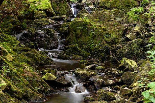 Disparo de gran angular de una cascada en el bosque rodeada de césped y rocas