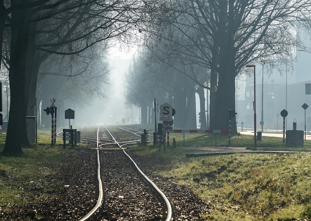 Disparo gran angular un ferrocarril atravesando el bosque