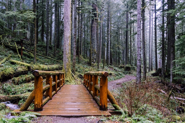 Disparo de gran angular de un puente en el bosque rodeado de árboles