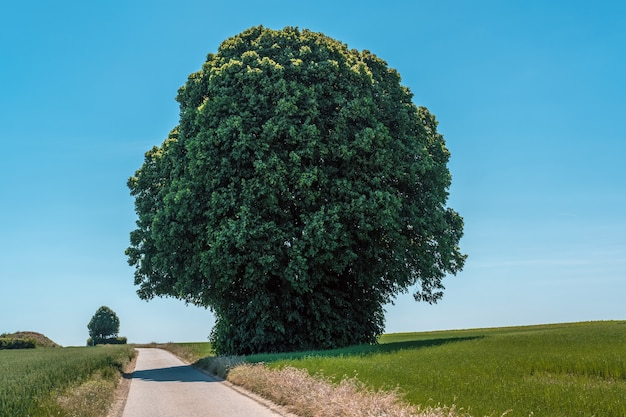 Disparo horizontal de un árbol verde gigante en un campo junto a una carretera estrecha durante el día