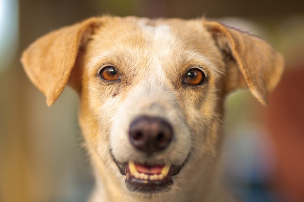Disparo horizontal de un lindo y feliz perro marrón