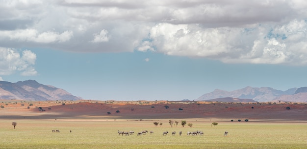 Disparo horizontal del paisaje en el desierto de namib en namibia bajo el cielo nublado