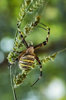 Disparo vertical de una araña de jardín amarilla en una rama en un campo bajo la luz del sol