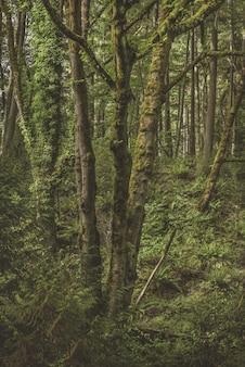 Disparo vertical de un árbol cubierto de musgo rodeado de plantas verdes en el bosque