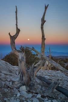Disparo vertical de un árbol muerto en una increíble puesta de sol
