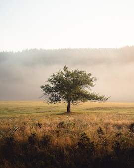 Disparo vertical de un árbol solitario en medio de la pradera frente a colinas altas en la mañana