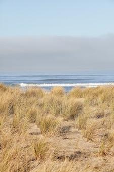 Disparo vertical de beachgrass en la mañana en cannon beach, oregon