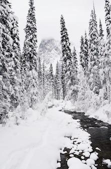 Disparo vertical del bosque de pinos cubierto de nieve en invierno