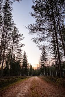 Disparo vertical de un camino vacío en el bosque con árboles altos durante la puesta de sol
