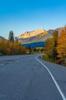 Disparo vertical de la carretera vacía junto con árboles de otoño en kananaskis, alberta, canadá