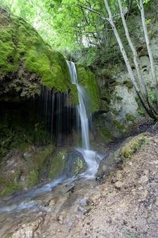 Disparo vertical de una cascada en medio del bosque en la región de eiffel, alemania