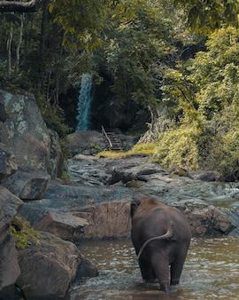 Disparo vertical de un elefante bebé caminando en un estanque con árboles verdes en la distancia