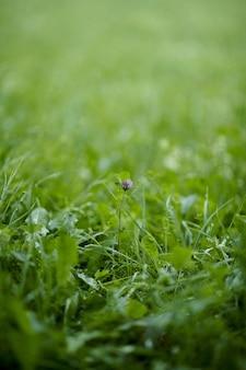 Disparo vertical de una flor morada sobre verde hierba fresca