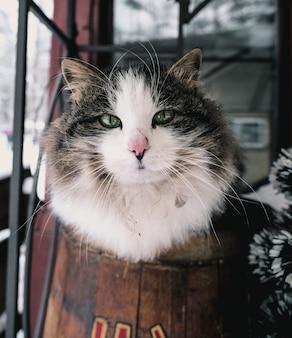 Disparo vertical de un gato blanco y negro en una habitación