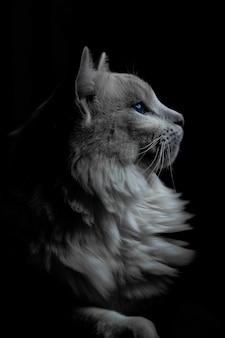 Disparo vertical de un gato gris con ojos azules en la oscuridad
